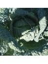 Choux de Milan d'été et d'automne des vertus - 200 graines 3,40€
