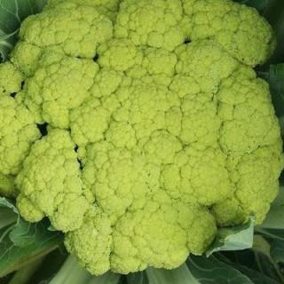 Choux fleurs verde di macerata sachet de 200 graines 3,40€