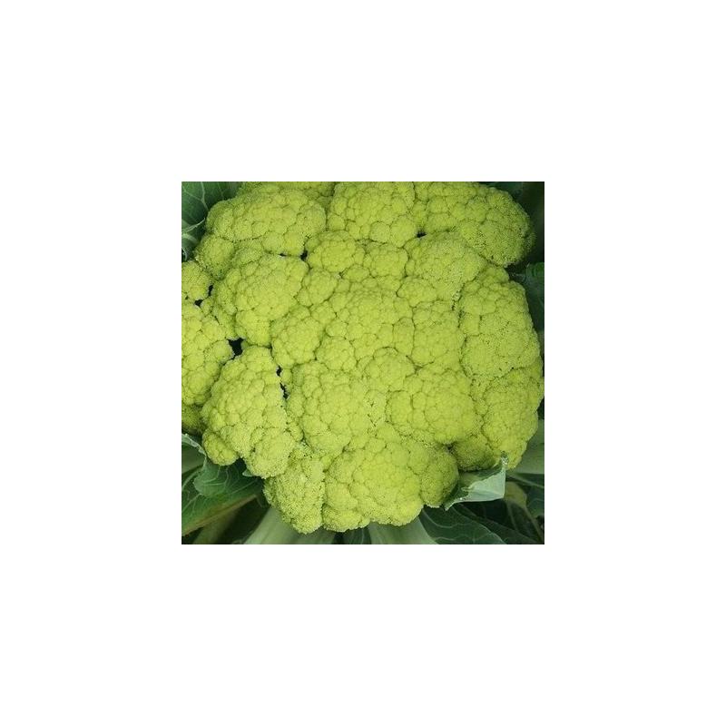 Choux fleurs verde di macerata sachet de 200 graines