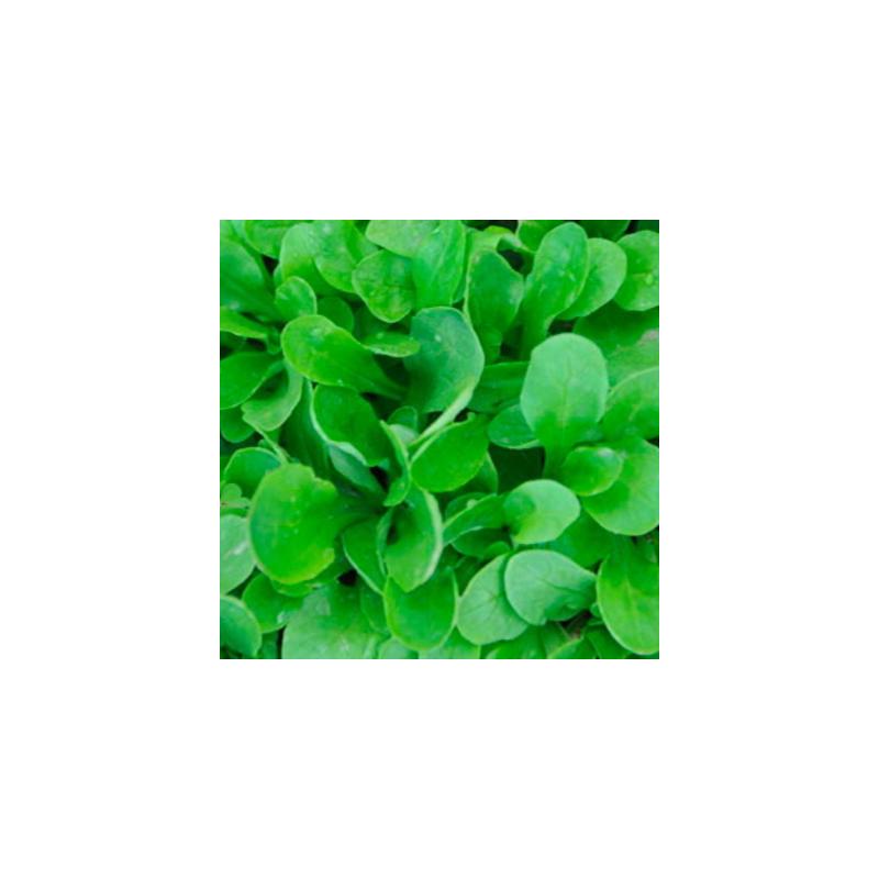 Mâche verte à cœur plein bio sachet 4 gr