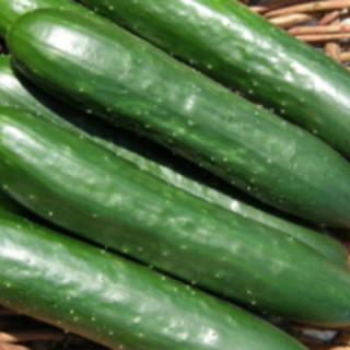 Concombre green finger bio sachet de 25 graines