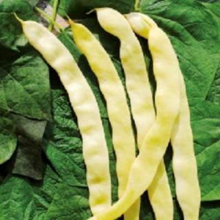 Haricot mange-tout à rames bio sachet 80 gr
