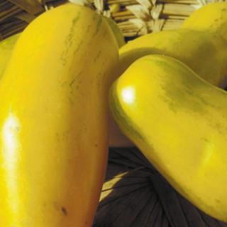 Tomate jaune banana legs bio - sachet de 35 graines 3,40€