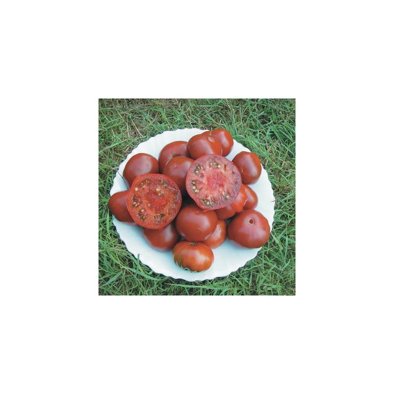 Tomate noire black aisberg bio - sachet de 35 graines