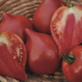 Tomate cœur de bœuf de Nice bio - sachet de 35 graines