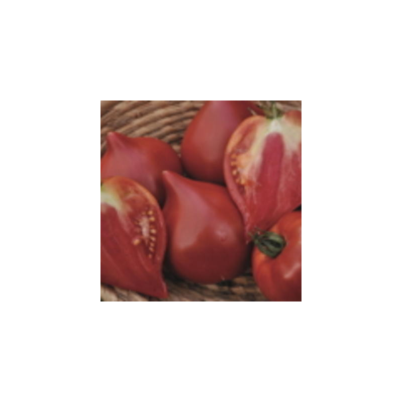 Tomate cœur de bœuf de Nice bio - sachet de 35 graines 3,40€