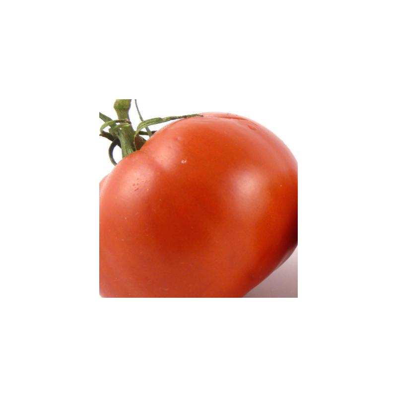 Tomate rouge charnue de Huy bio - sachet 35 graines