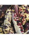 Maïs doux arc en ciel inca bio - sachet 30 gr 3,40€