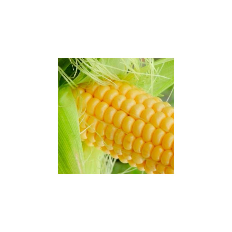 Maïs doux golden bantam bio - sachet 30 gr
