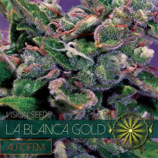 La blanca gold auto vision seeds 17,50€
