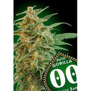 Auto gorilla 00 seeds bank