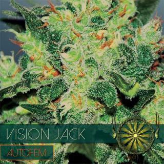 Vision jack auto vision seeds 17,50€