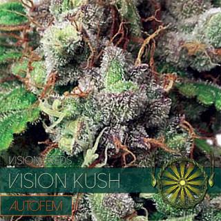 Vision kush auto vision seeds 17,50€