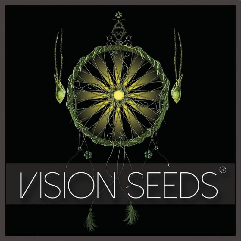 Lamb's breath x AK 49 vision seeds