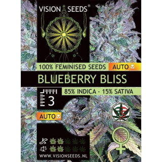 Blueberrry bliss auto vision seeds
