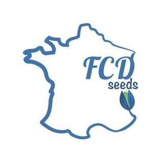 Orange bud FCD Seeds féminisée