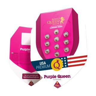 Purple queen royal queen seeds féminisée