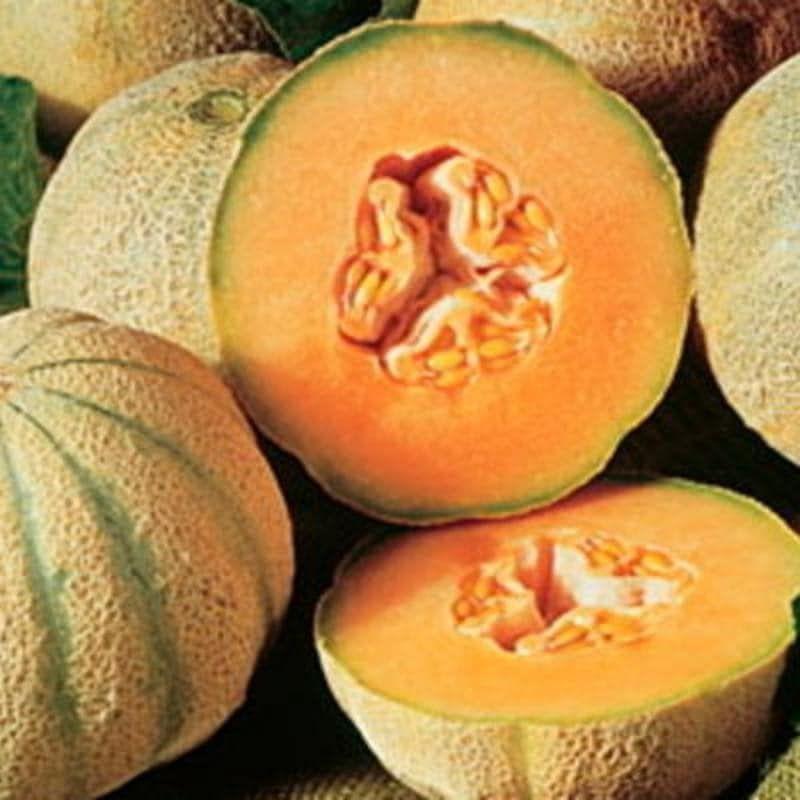 Melon cantaloup charentais bio - 25 graines