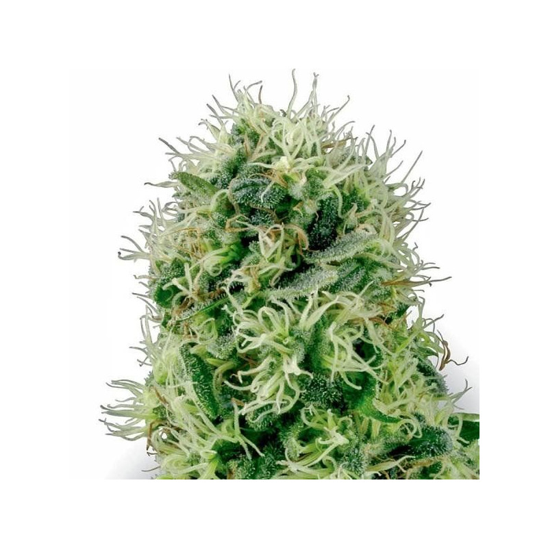 Pure power plant white label seeds