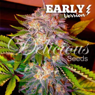 Caramelo F1 early version delicious seeds