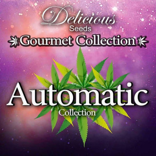 Gourmet collection automatic strains 2
