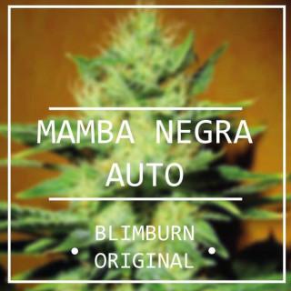 Mamba negra auto (black mamba) - blimburn