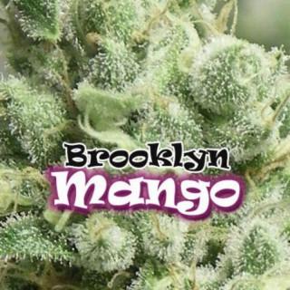 Brooklyn mango dr underground