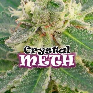 Crystal meth Dr underground féminisée