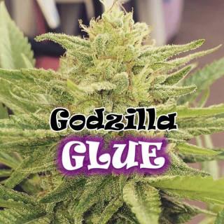 Godzilla glue féminisée Dr underground