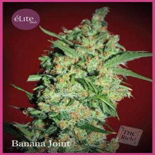 Banana joint elite seeds féminisée