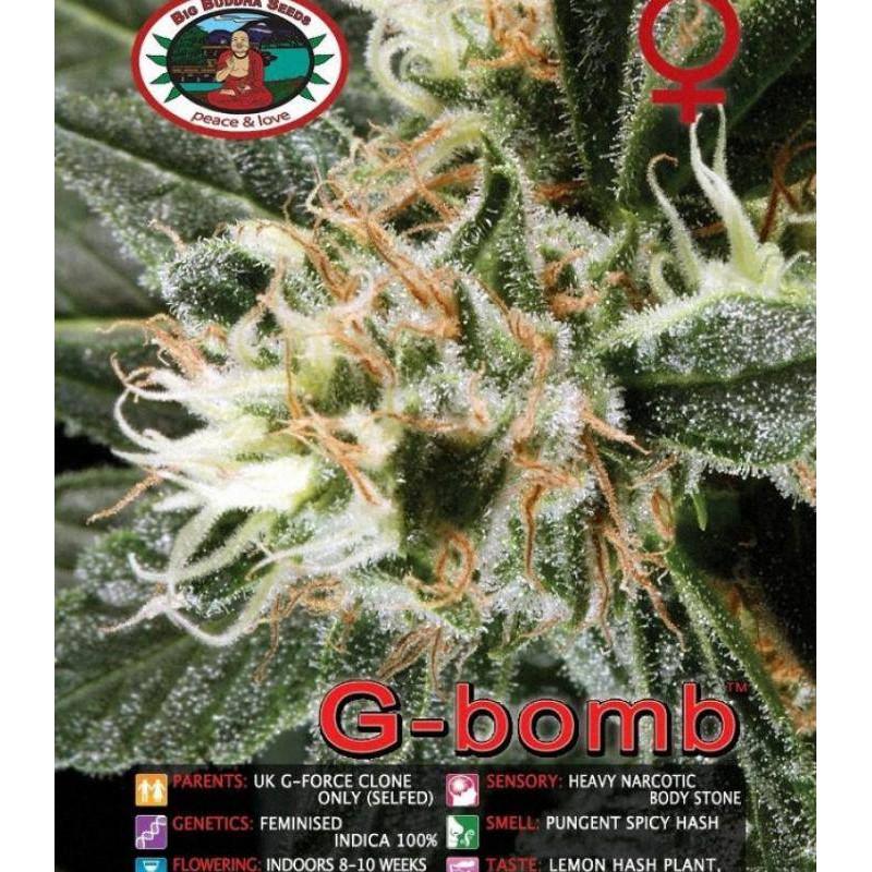 G-bomb big buddha seeds féminisée
