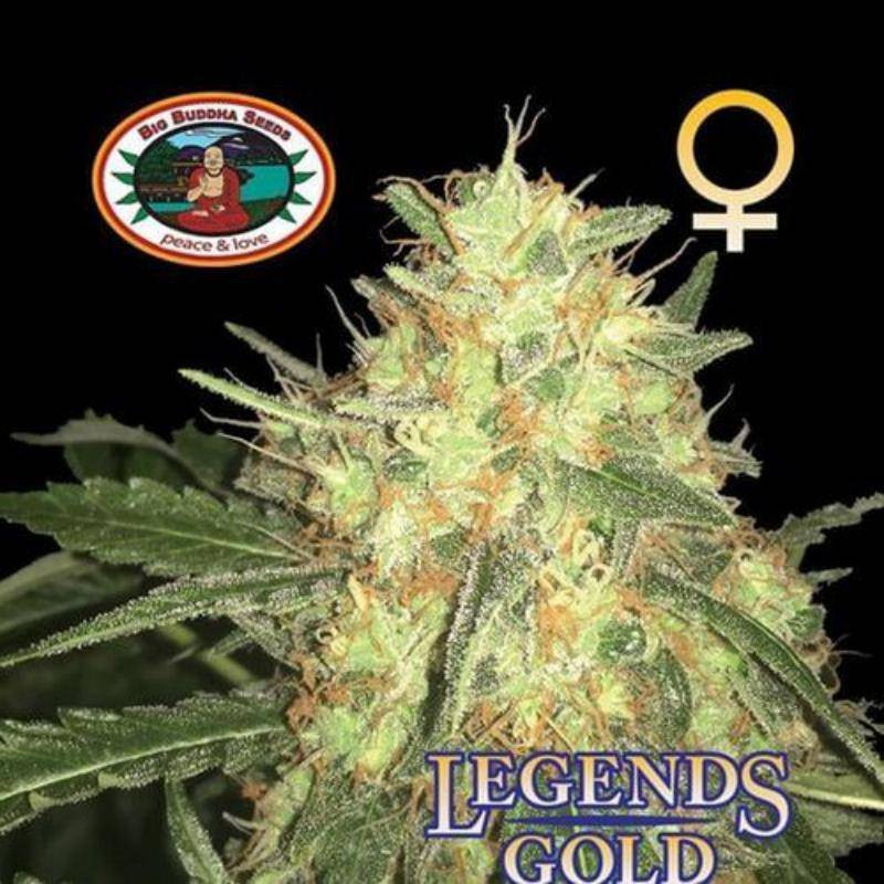 Legends gold big buddha seeds - féminisée