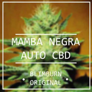 Mamba negra auto CBD - blimburn seeds