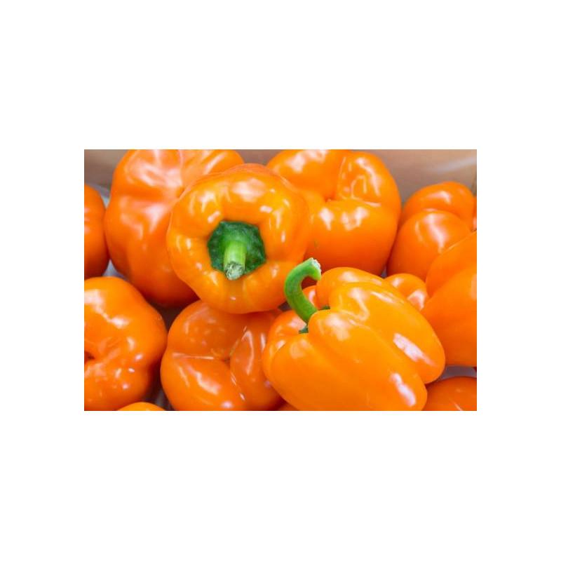 Poivron orange Bell de Mi-saison sachet de 25 graines- Kokopelli