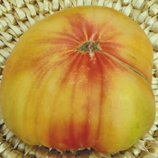Tomate Bigarrée Striped German sachet de 35 graines- Kokopelli