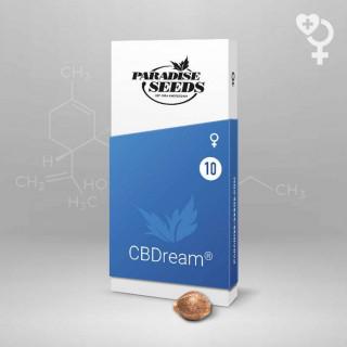 CBDream Paradise Seeds - Féminisée