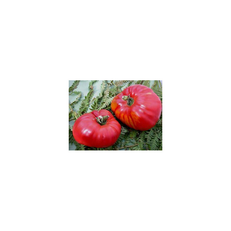 Tomate Rouge German Red Strawberry - Kokopelli